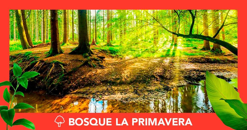 Bosque de La Primavera